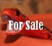 Abzugeben / For sale