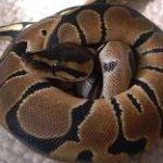 python1